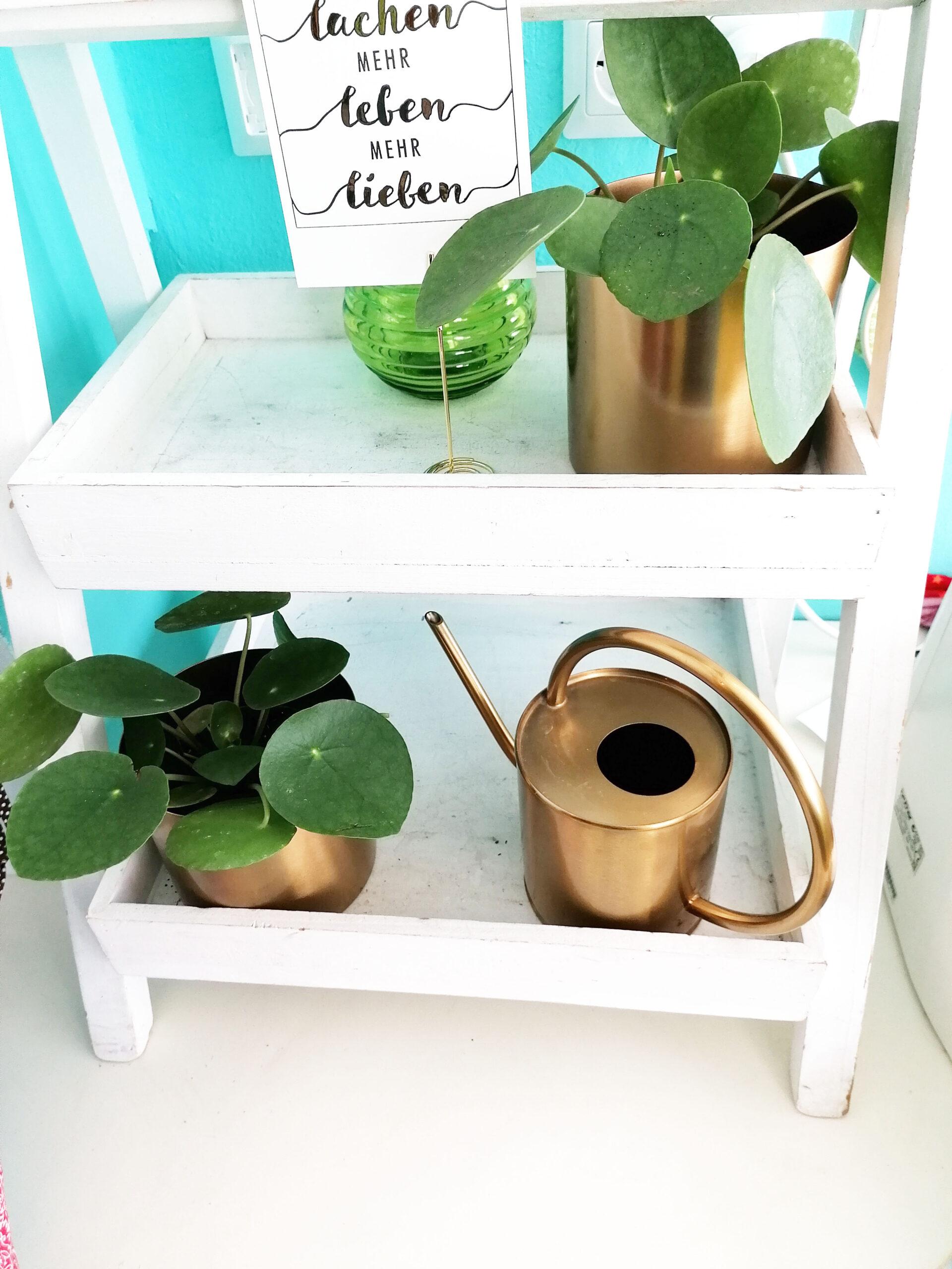 Pflanzen im Büro